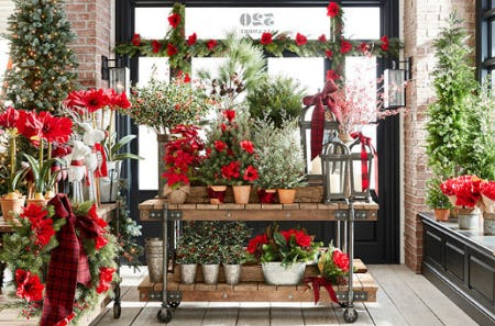 Holiday Botanicals from Pottery Barn