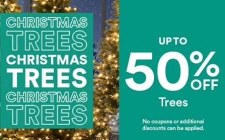 Up to 50% Off on Trees