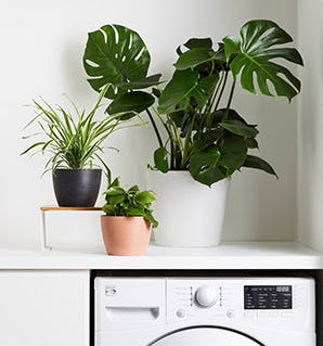 New Live Plants from Bloomscape from West Elm