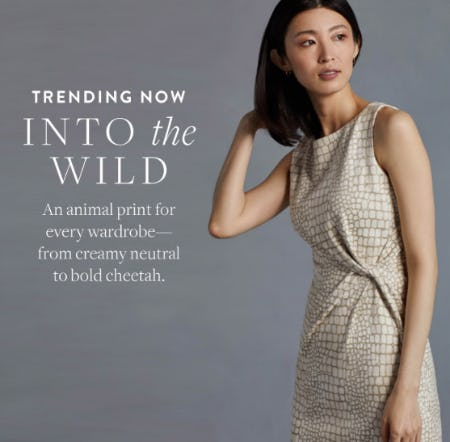 Trending Now: Into the Wild from J. Mclaughlin
