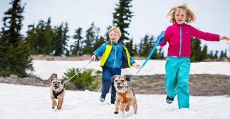 Our Winter Favorite Dog Supplies are Here