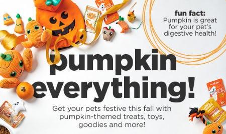Pumpkin-Themed Treats, Toys, Goodies & More