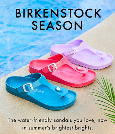 Super Bright Birkenstock Sandals from DSW Shoes
