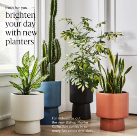 New Indoor or Outdoor Planters from West Elm