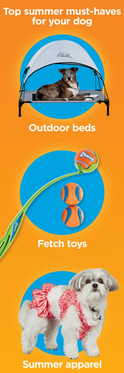 Top Summer Must-Haves for Your Dog from Petco Supplies & Fish