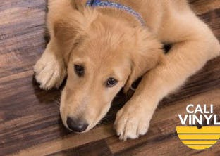 Cali Vinyl Pet Flooring
